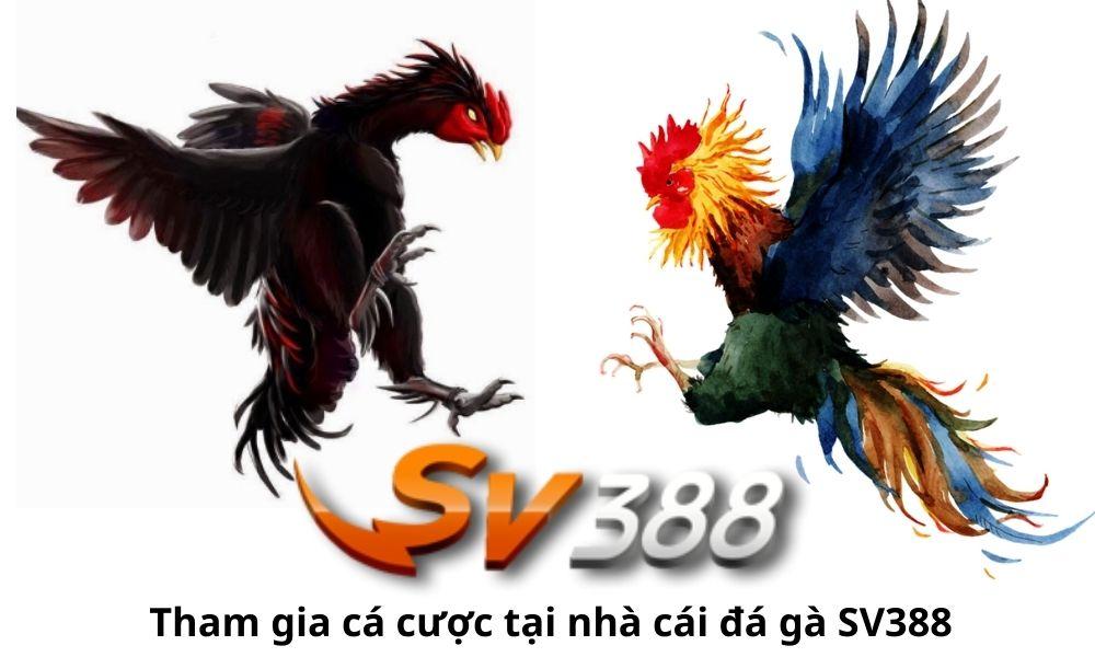 Tham gia cá cược tại nhà cái đá gà SV388
